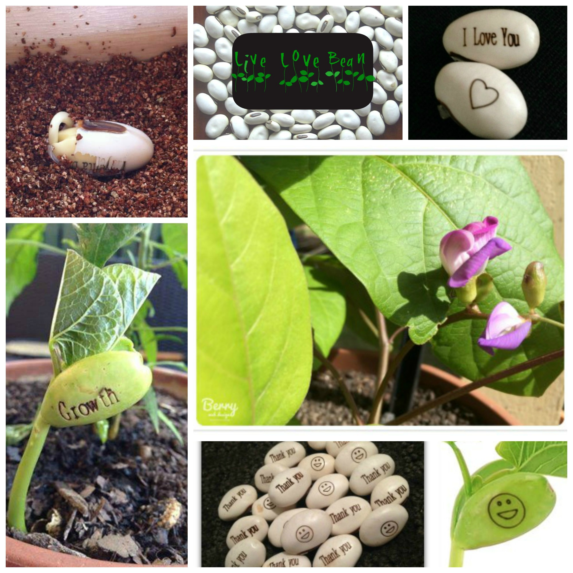 plants that grow with words on them