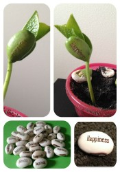 health happiness magic bean sprouting